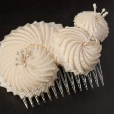 Haircomb Nautilus Snail