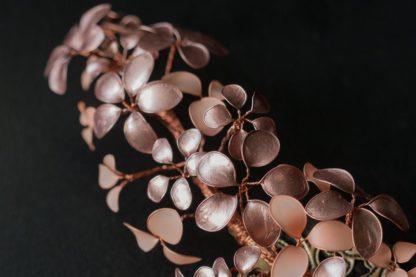 Lackblüten Rosa